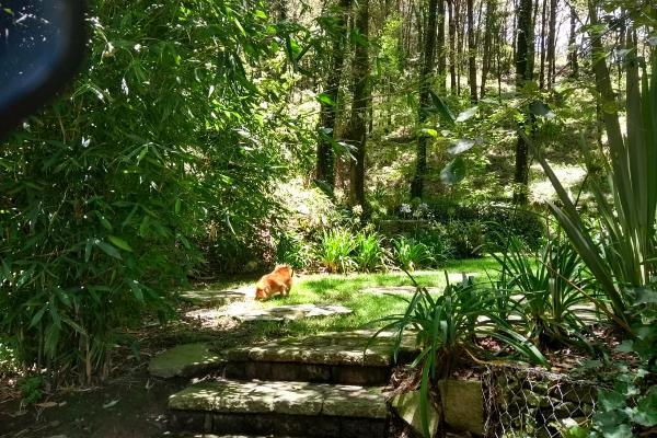 Foto de terreno habitacional en venta en bosques del zumate , el espejo, omitlán de juárez, hidalgo, 6153345 No. 02
