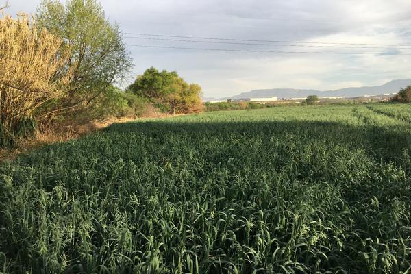 Foto de terreno habitacional en venta en boulevard industria de la transformación s/n , parque industrial, ramos arizpe, coahuila de zaragoza, 0 No. 06