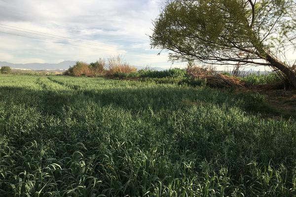 Foto de terreno habitacional en venta en boulevard industria de la transformación s/n , parque industrial, ramos arizpe, coahuila de zaragoza, 0 No. 07