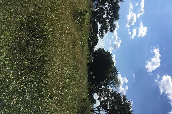 Foto de terreno habitacional en venta en bugambilias , paso de la comunidad, ocotlán, jalisco, 14031609 No. 07