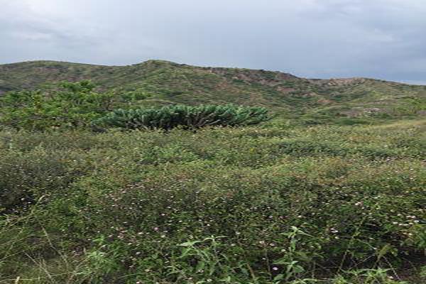 Foto de terreno habitacional en venta en  , burocrático, guanajuato, guanajuato, 13598758 No. 07