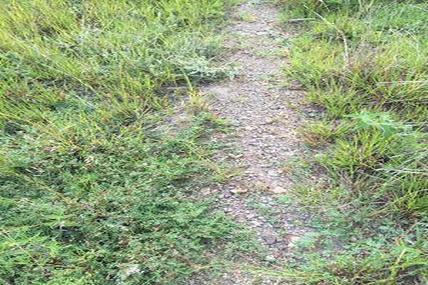 Foto de terreno habitacional en venta en  , burocrático, guanajuato, guanajuato, 13598758 No. 11