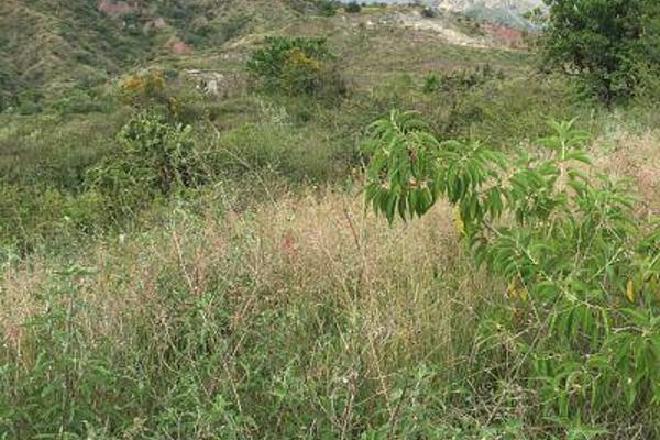 Foto de terreno habitacional en venta en  , burocrático, guanajuato, guanajuato, 8897750 No. 10