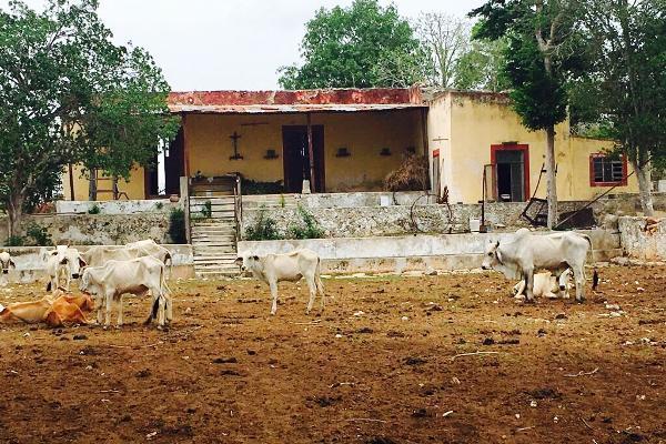 Foto de rancho en venta en cacalchén , cacalchen, cacalchén, yucatán, 3628421 No. 01