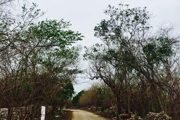 Foto de rancho en venta en cacalchén , cacalchen, cacalchén, yucatán, 3628421 No. 19
