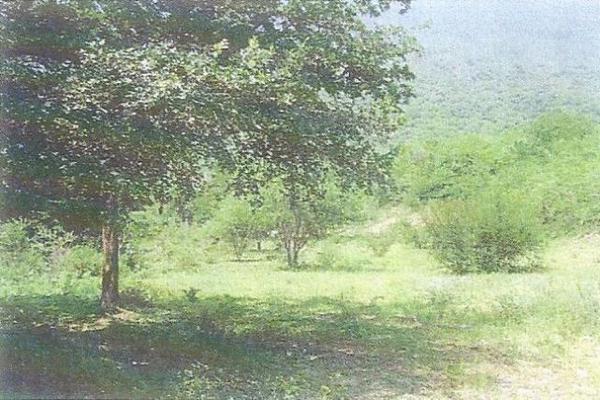 Foto de terreno habitacional en venta en  , cadereyta jimenez centro, cadereyta jiménez, nuevo león, 10648324 No. 04