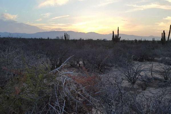 Foto de terreno habitacional en venta en calle 12 , agua blanca, la paz, baja california sur, 5451971 No. 11