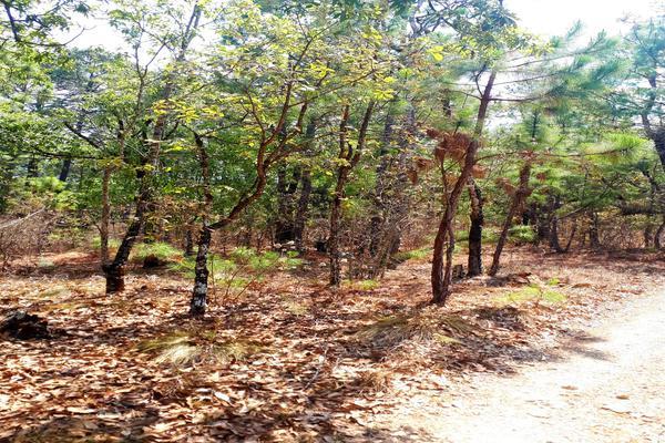 Foto de terreno habitacional en venta en calle principal , teopisca, teopisca, chiapas, 7243775 No. 02