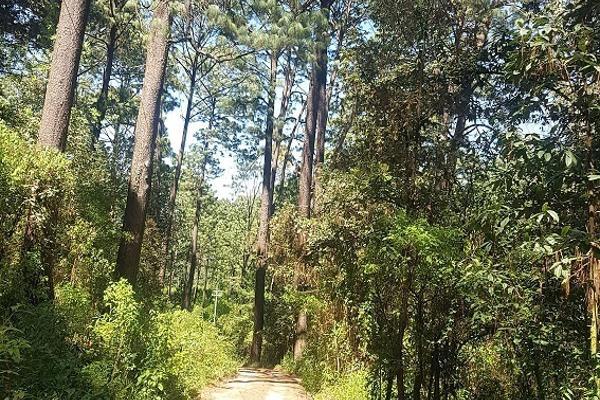 Foto de terreno habitacional en venta en peña blanca , valle de bravo, valle de bravo, méxico, 5854028 No. 03