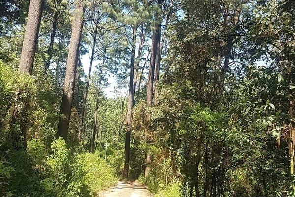Foto de terreno habitacional en venta en camino a la peña , valle de bravo, valle de bravo, méxico, 5874291 No. 03