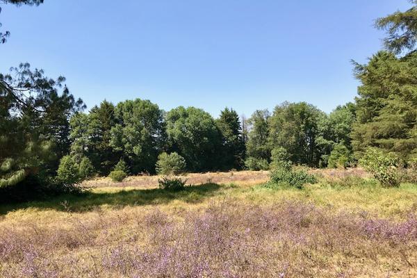 Foto de terreno habitacional en venta en camino a peña blanca s/n , peña blanca, valle de bravo, méxico, 0 No. 09