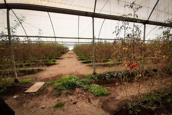 Foto de terreno industrial en venta en camino a tenextepec , tenextepec, atlixco, puebla, 19068190 No. 03