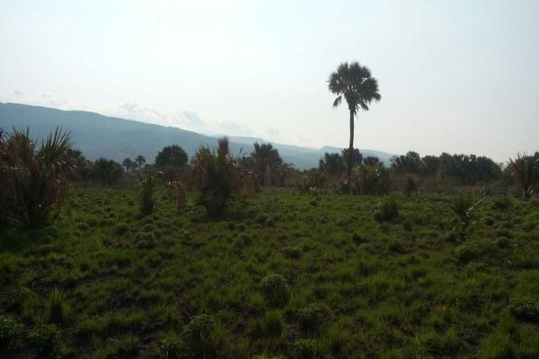 Foto de terreno habitacional en venta en camino al limon , tzimol, tzimol, chiapas, 8151778 No. 02