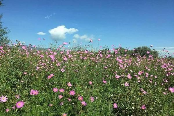Foto de terreno industrial en venta en camino de las animas , tepotzotlán, tepotzotlán, méxico, 7224824 No. 11