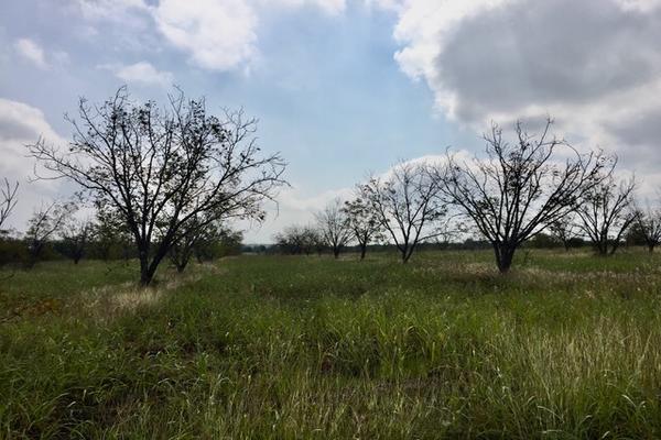 Foto de terreno habitacional en venta en camino de san isidro sn , el barranquito, cadereyta jiménez, nuevo león, 12822387 No. 10