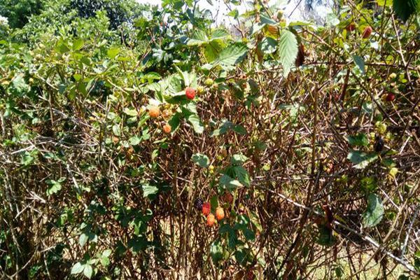 Foto de rancho en venta en camino viejo a tlacotitlan , san josé tlacotitlán, ozumba, méxico, 7195547 No. 30