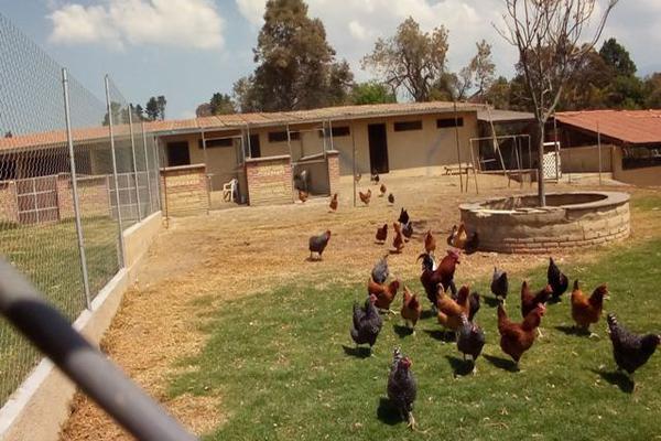 Foto de rancho en venta en camino viejo a tlacotitlan , san josé tlacotitlán, ozumba, méxico, 7195547 No. 45
