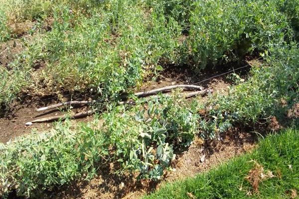 Foto de rancho en venta en camino viejo a tlacotitlan , san josé tlacotitlán, ozumba, méxico, 7195547 No. 52