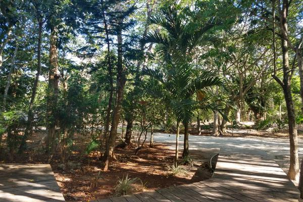Foto de terreno habitacional en venta en  , cancún centro, benito juárez, quintana roo, 8205795 No. 03