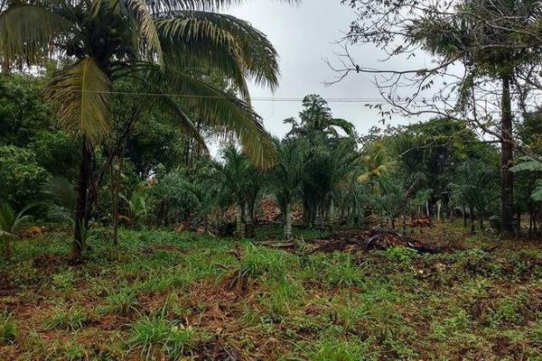Foto de terreno habitacional en venta en  , carlos a madrazo, othón p. blanco, quintana roo, 7211487 No. 03