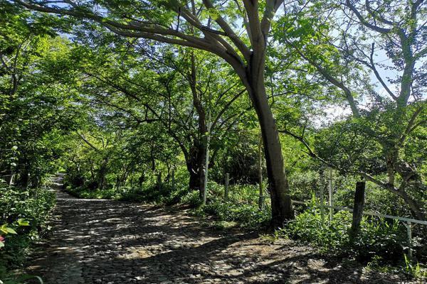 Foto de terreno habitacional en venta en carrejon - carretera villa de alvarez comala kilometro 5 , lomas de comala, comala, colima, 15781019 No. 03