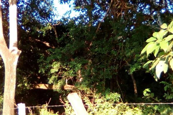 Foto de terreno habitacional en venta en carretera a cotaxtla 51, jamapa, jamapa, veracruz de ignacio de la llave, 4236900 No. 03