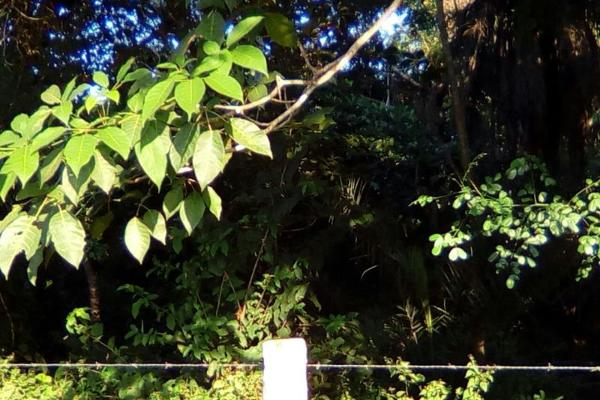 Foto de terreno habitacional en venta en carretera a cotaxtla 51, jamapa, jamapa, veracruz de ignacio de la llave, 4236900 No. 04