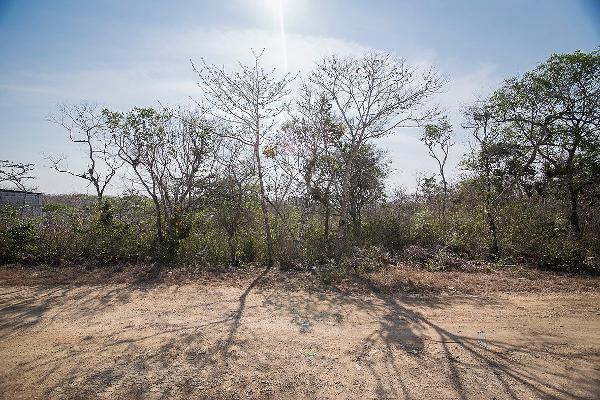 Foto de terreno habitacional en venta en carretera al istmo kilometro 130 , candelaria, berriozábal, chiapas, 3156937 No. 07