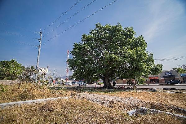 Foto de terreno habitacional en venta en carretera al istmo kilometro 130 , candelaria, berriozábal, chiapas, 3156937 No. 13