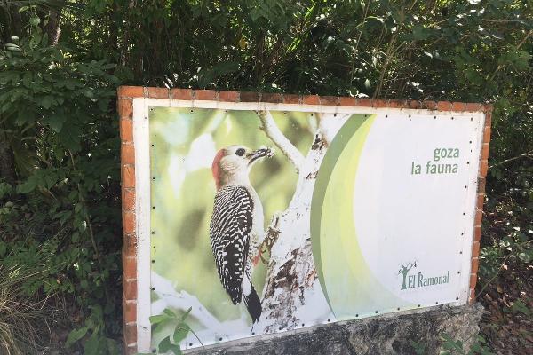 Foto de terreno habitacional en venta en carretera cancún mérida , cancún centro, benito juárez, quintana roo, 5886308 No. 01