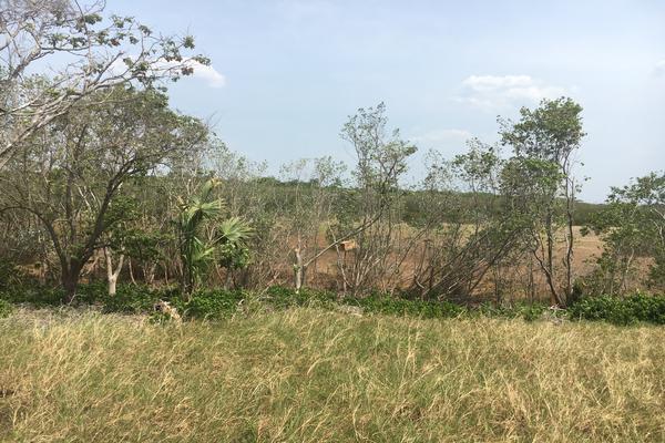 Foto de terreno habitacional en venta en carretera champoton cd del carmen kilometro 120 , san luis carpizo, champotón, campeche, 7243988 No. 07
