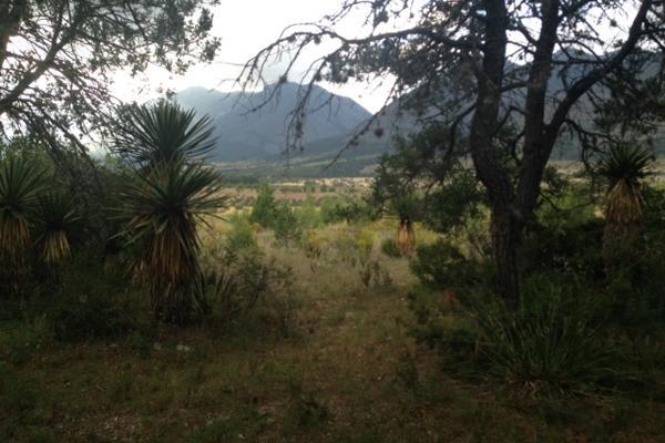 Foto de terreno habitacional en venta en carretera el tunal , el cedrito, arteaga, coahuila de zaragoza, 3455452 No. 03