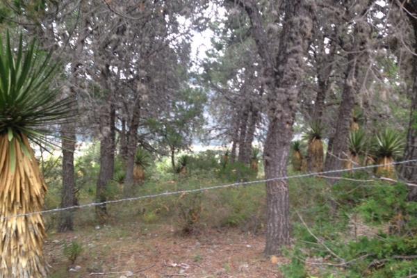 Foto de terreno habitacional en venta en carretera el tunal , el cedrito, arteaga, coahuila de zaragoza, 3455452 No. 05