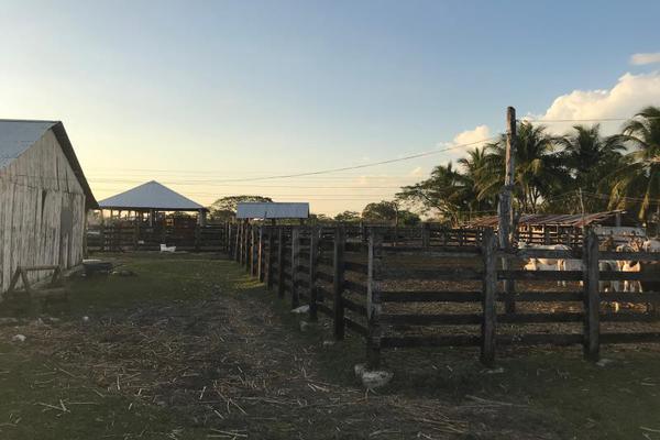 Foto de rancho en venta en carretera federal 186 chetumal - villahermosa 186, pital nuevo, carmen, campeche, 7197015 No. 08