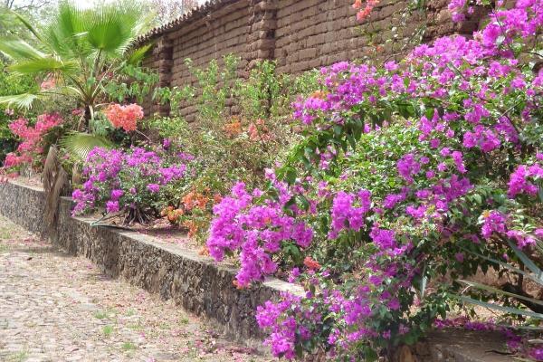 Foto de terreno habitacional en venta en carretera gdl-tepic , amatitan, amatitán, jalisco, 6199990 No. 05