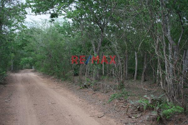 Foto de terreno comercial en venta en carretera internacional 15 , agua caliente de garate, concordia, sinaloa, 5641495 No. 03