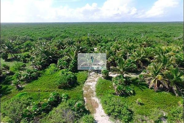 Foto de terreno habitacional en venta en carretera mahahual & punta putickb kilometro 53.5 , pucte, othón p. blanco, quintana roo, 5695036 No. 07