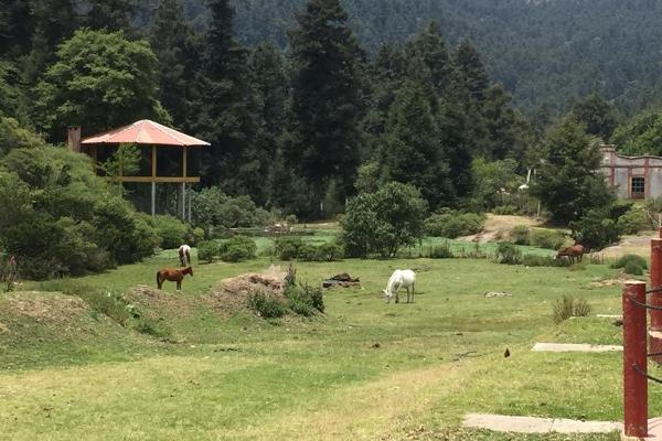 Foto de terreno habitacional en venta en carretera mineral del monte , privada del bosque, pachuca de soto, hidalgo, 8854097 No. 02