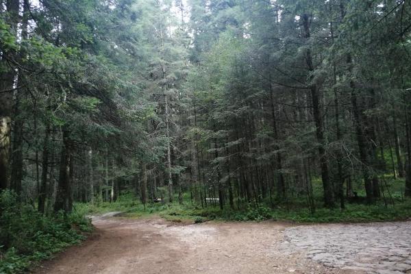 Foto de terreno habitacional en venta en carretera mineral del monte , privada del bosque, pachuca de soto, hidalgo, 8854097 No. 09