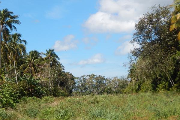 Foto de terreno comercial en renta en carretera paraiso comalcalco , moctezuma 1, paraíso, tabasco, 5339633 No. 01