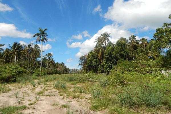 Foto de terreno comercial en renta en carretera paraiso comalcalco , moctezuma 1, paraíso, tabasco, 5339633 No. 02