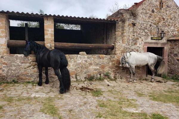 Foto de terreno habitacional en venta en carretera queretaro kilometro 27 s / n, jonacapa, huichapan, hidalgo, 11434382 No. 16