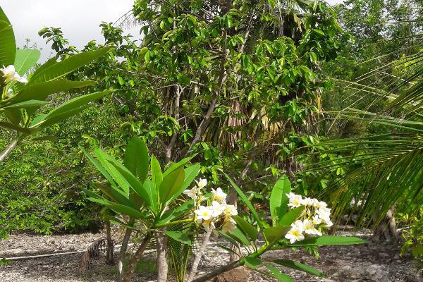 Foto de rancho en venta en carretera rancho viejo , isla mujeres centro, isla mujeres, quintana roo, 3479358 No. 03
