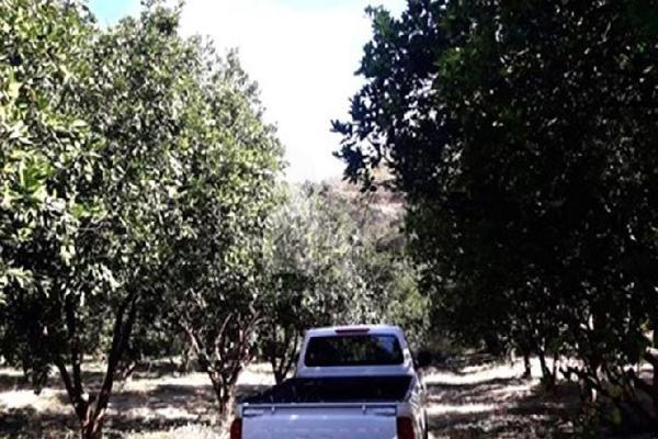 Foto de terreno comercial en venta en carretera tehuixtla-chisco , tilzapotla, puente de ixtla, morelos, 0 No. 03
