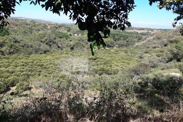 Foto de terreno comercial en venta en carretera tehuixtla-chisco , tilzapotla, puente de ixtla, morelos, 0 No. 02