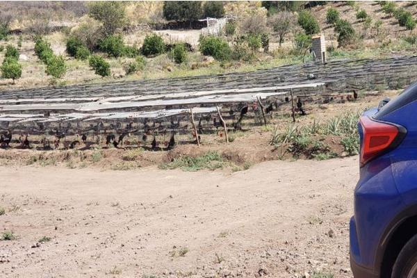 Foto de rancho en venta en carretera zapotlanejo atotonilco el alto , zapotlanejo, zapotlanejo, jalisco, 13646463 No. 02