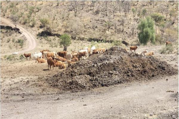 Foto de rancho en venta en carretera zapotlanejo atotonilco el alto , zapotlanejo, zapotlanejo, jalisco, 13646463 No. 05