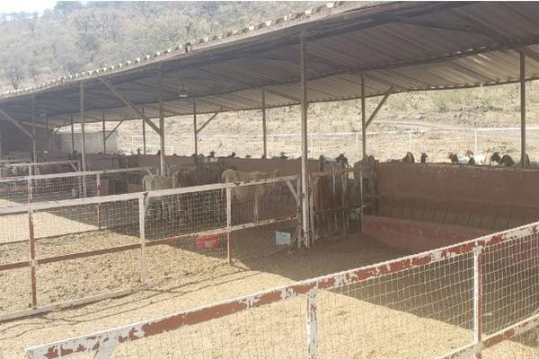 Foto de rancho en venta en carretera zapotlanejo atotonilco el alto , zapotlanejo, zapotlanejo, jalisco, 13646463 No. 07