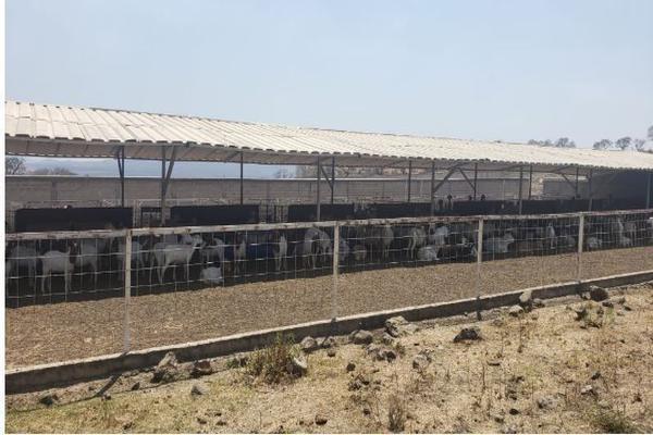 Foto de rancho en venta en carretera zapotlanejo atotonilco el alto , zapotlanejo, zapotlanejo, jalisco, 13646463 No. 11