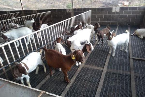 Foto de rancho en venta en carretera zapotlanejo atotonilco el alto , zapotlanejo, zapotlanejo, jalisco, 13646463 No. 12